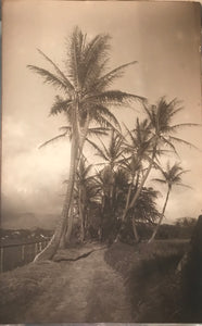 1910 Vintage  Photograph By AR Gurrey Of Waikiki Hawaii