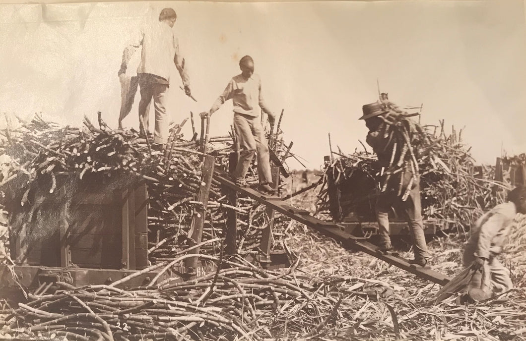 1880's Vintage Albumen Photograph Of Sugar Cane And Workers In Hawaii