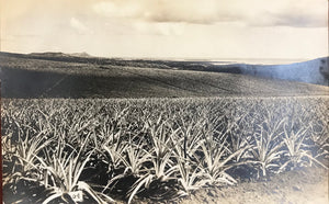 1920's Real Photo Post Card Of Pineapple Fields & Diamond Head Honolulu Hawaii