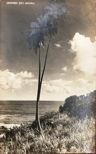 1920's Vintage Real Photo Post Card Of Onomea Bay Hawaii