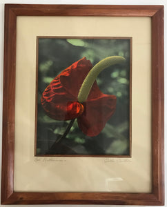1940's Vintage Hand Colored Photograph By Edithe Beutler 'Red Anthurium'