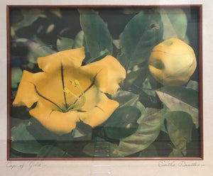 1940's Vintage Hand Colored Photograph By Edith Beutler 'Cup Of Gold'