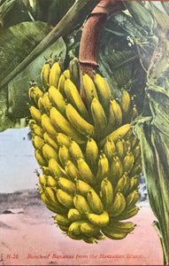 1910's Vintage Post Card Of A Banana Plant Honolulu Hawaii