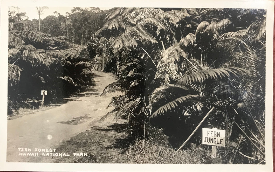 Vintage Real Photo Post Card Of Fern Forest In Volcano Hawaii