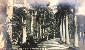 1920's Vintage Photograph Of A Royal Palm Driveway Honolulu Hawaii