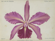 Orchid010
