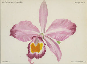 Orchid687