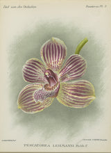 Orchid717