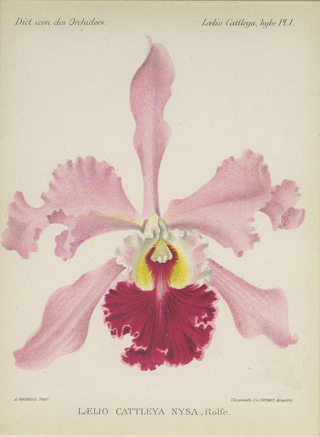 Orchid777