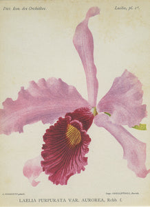 Orchid794