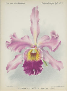 Orchid828