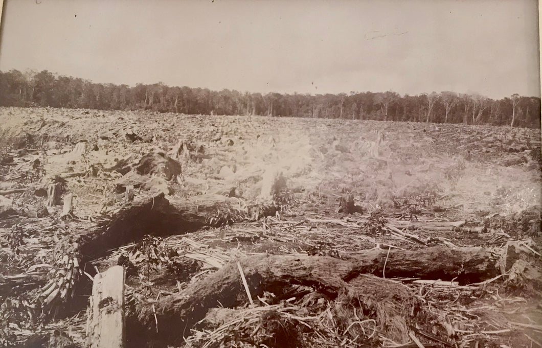 Clearing land Volcano   Albumen Photo c.1890