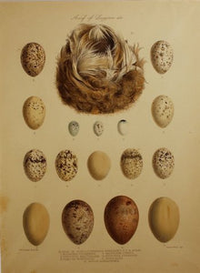 nest_of_acrucephalus_2012_detail