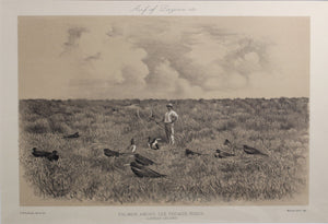 palmer_among_the_frigate_birds