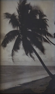 palmtrees_30002_c1890_295_517_detail