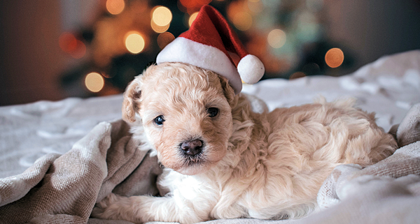 Tips for a Happy Holiday For Your Pet