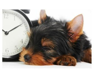 Daylight Savings Time and Your Pet : Six Tips for A Happier Pup
