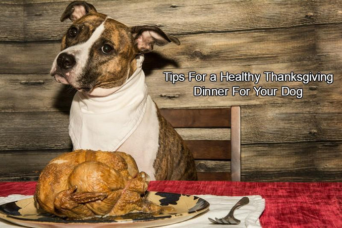 Thanksgiving Dinner for Your Dog