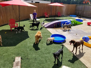 Doggie Day Care for Better Days for Your Pet