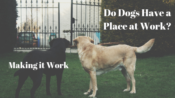 Dog Friendly Workplaces Rock for Companies , Employees, and Dogs!