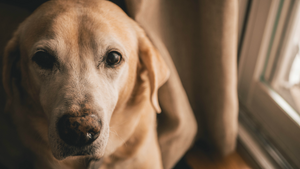 12 Tips for Better Home Alone Days for Your Dog