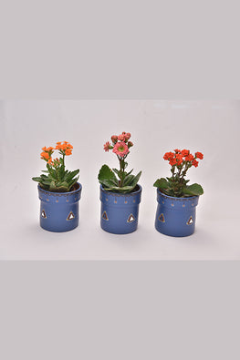 Antarang- Terracota Persian Blue Planters (Set of 3)