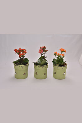 Antarang- Terracota Pastel Green Planters (Set of 3)