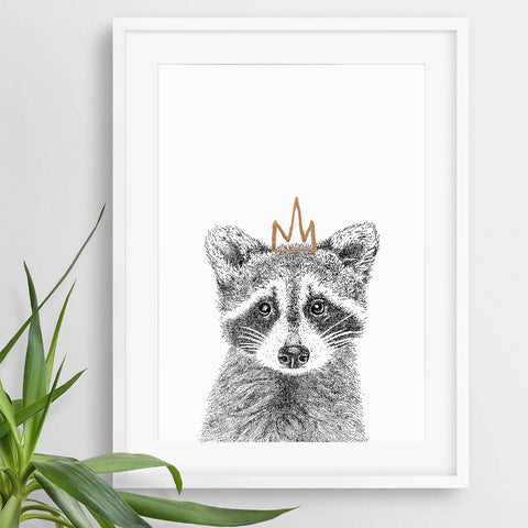cute raccoon animal pictures