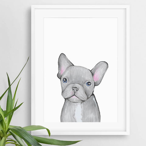 french bulldog puppy animal pictures