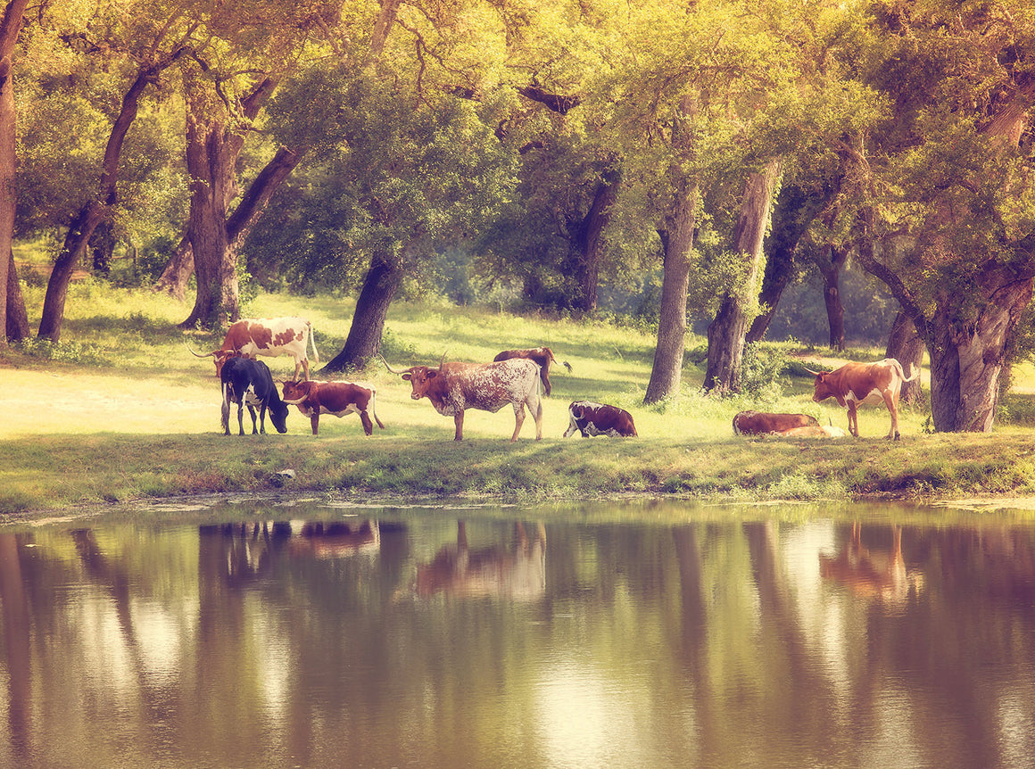Texas longhorn photography, texas landscape, texas photography, texas decor, landscape art, farmhouse decor, large wall art, longhorns