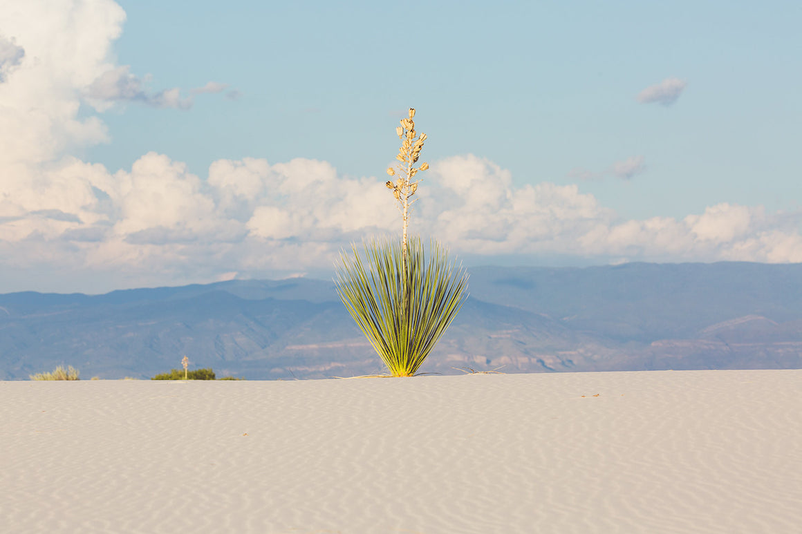 White Sands, No. 5