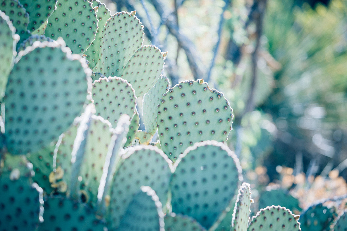 cactus photography, cactus print, southwest decor, texas decor, western print, southwestern print, texas art, large wall art, mint, cool