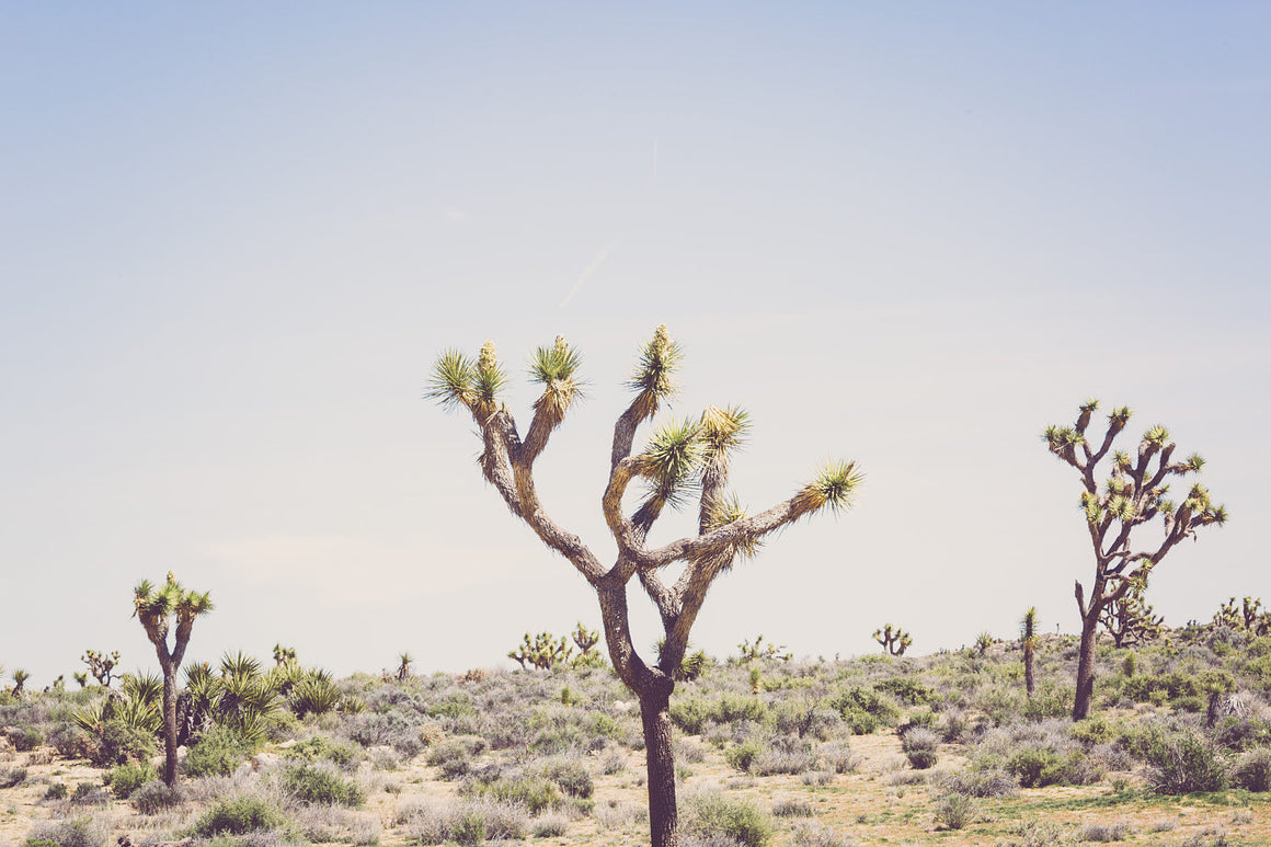 Desert photography, joshua tree, california photography, desert decor, minimalist, southwestern decor, large wall art, desert art, boho