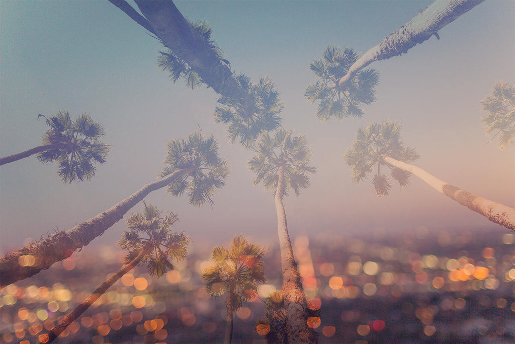 Los angeles photography, california photography, LA decor, city lights, la la land, double exposure, palm tree photograph, large wall art