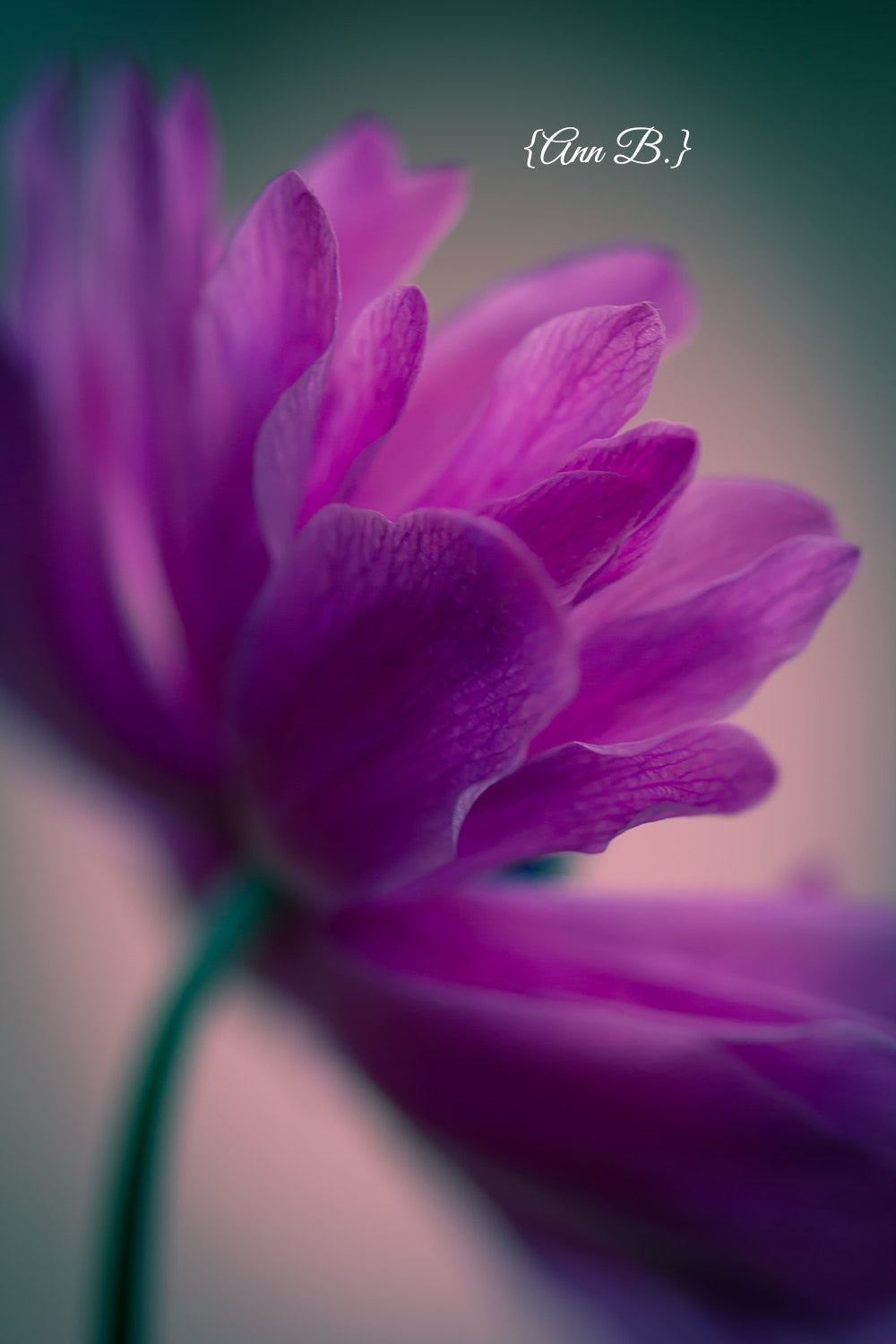 "Bold botanical prints, flower photography, modern still life, purple decor, lush, large wall art, nature prints, teal - ""Standing Ovation"""