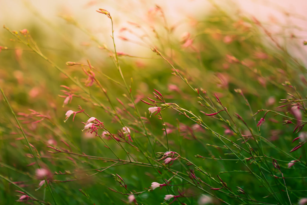 Nature Landscape Photography nursery art Botanical prints wildflowers Morning, Sunrise, Pink green decor feminine meadow - Summer's End