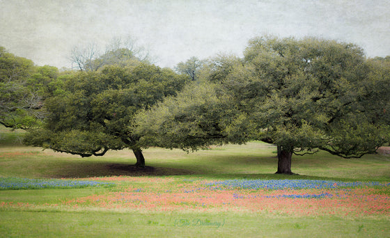 texas photography, landscape prints, nature art, rustic decor, bluebonnets, indian paintbrush, brenham, blue, red, green - Texas Bluebonnets