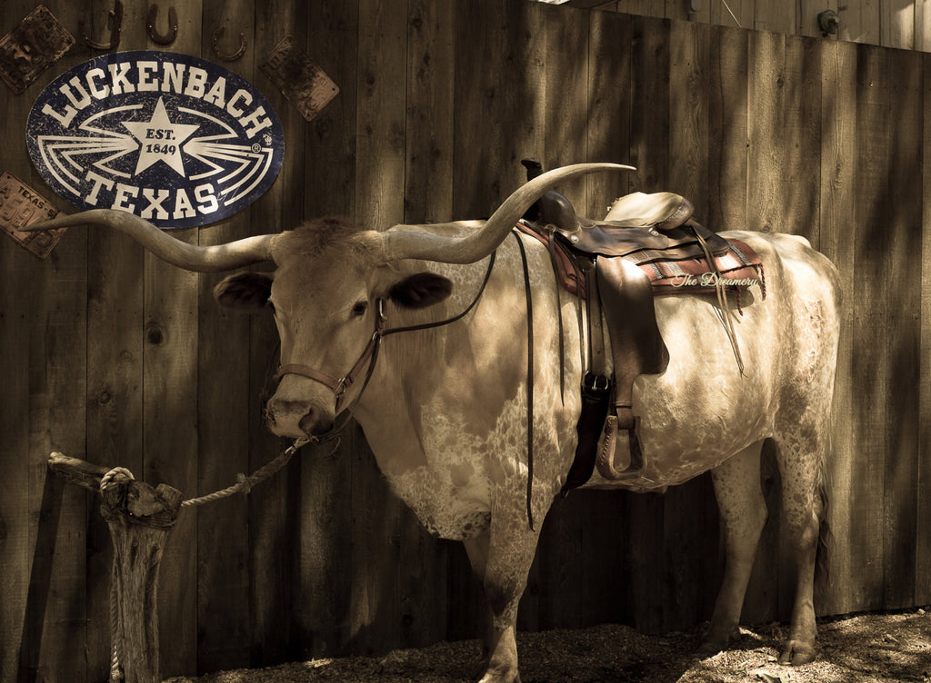 Luckenbach Longhorn - Texas photography rustic decor masculine longhorns cattle  luckenbach texas cowboy old west sepia warm tones