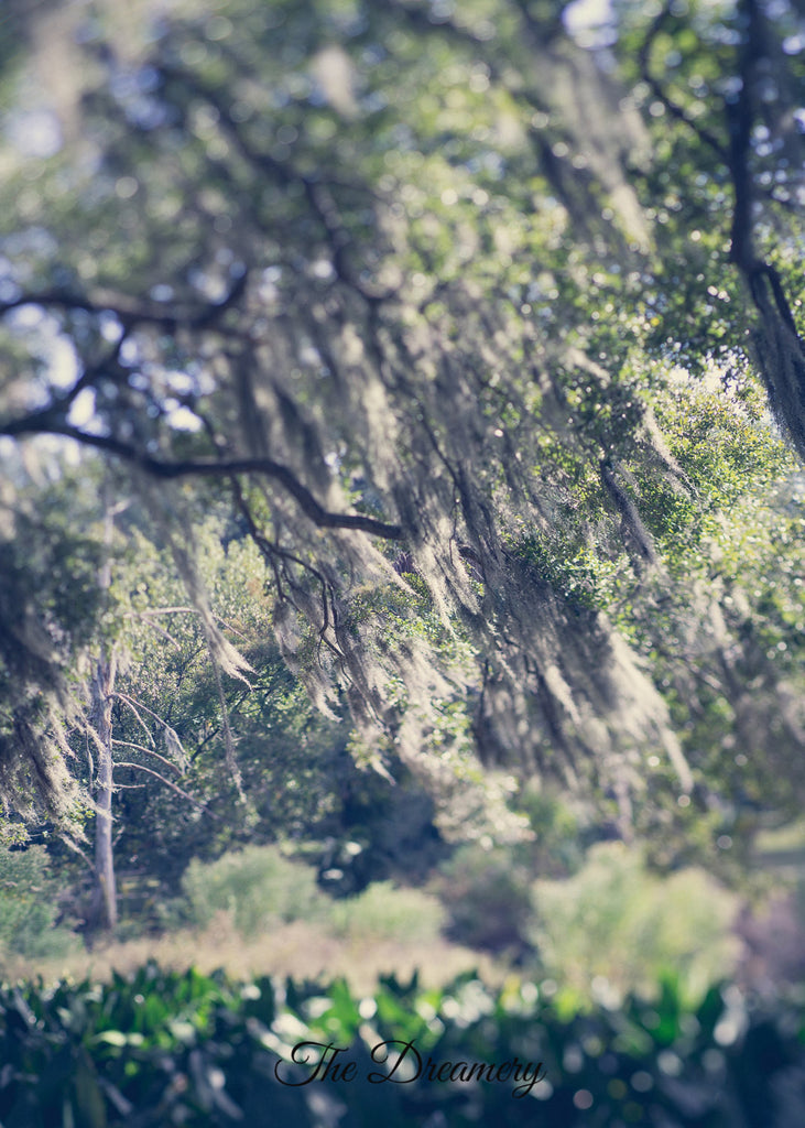 New Orleans photography, dreamy landscape spanish moss oaks nola prints louisiana decor fine art prints large wall art romantic art green