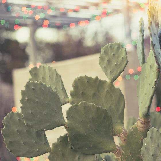 Austin photography, cactus photography, bokeh, party lights, summer nights, nature photography, vintage inspired, urban, green decor
