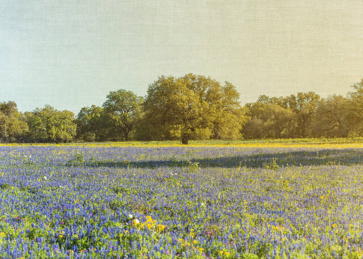 texas photography, texas bluebonnets, texas landscape, rustic decor, wildflowers, blue, landscape photography, poteet, dreamy, yellow, sunny