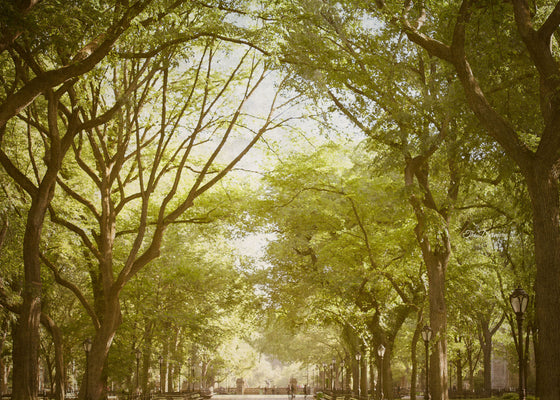 central park photography new york city decor nyc photography urban decor large wall art