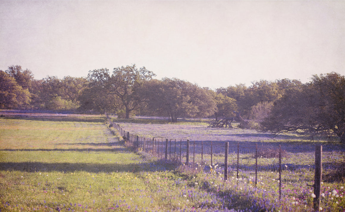 texas photography, texas bluebonnets, texas landscape, rustic decor, wildflowers, purple, landscape photoraphy, texas decor, live oak, farm