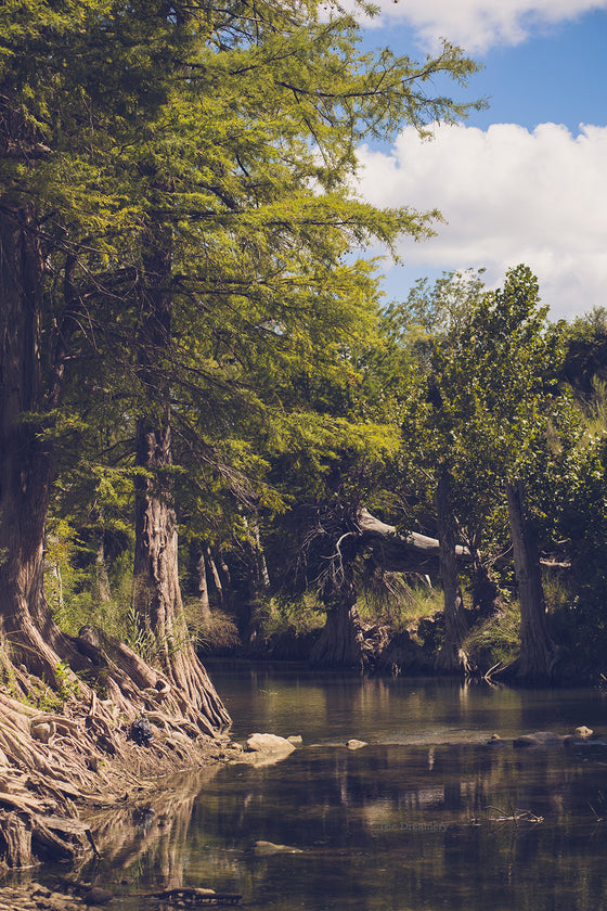 Texas photography, texas decor, blanco river, cypress trees, texas hillcountry, texas art, texas home, hillcountry art,  large wall art,