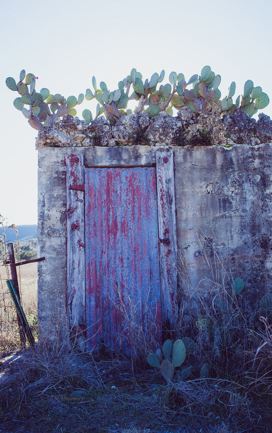 Texas photography, texas hillcountry, cactus photography, texas decor, jungalow, southwestern decor, cactus photography, abandoned