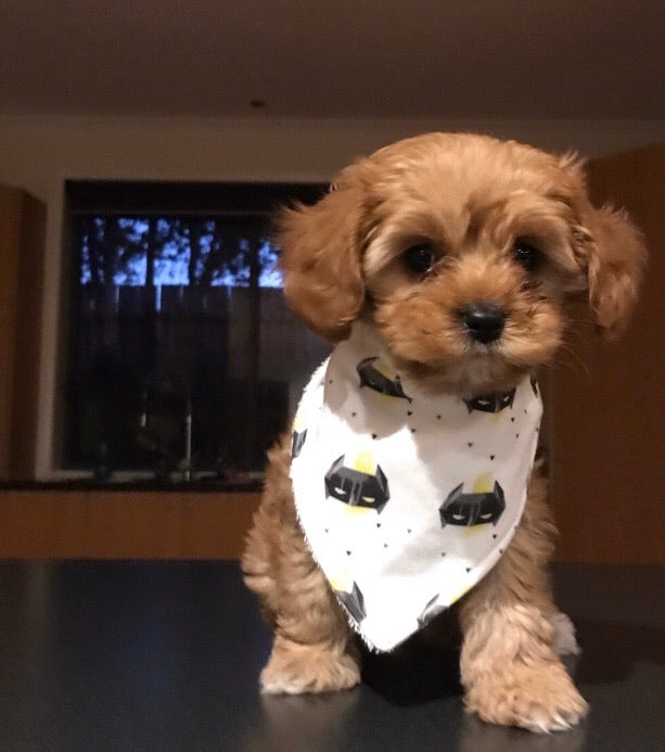 BATMAN YELLOW Organic Cotton Dog Bandana Bib