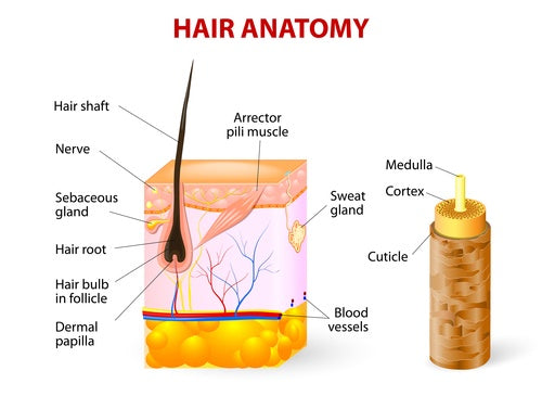 Hairloss vs Thyroid