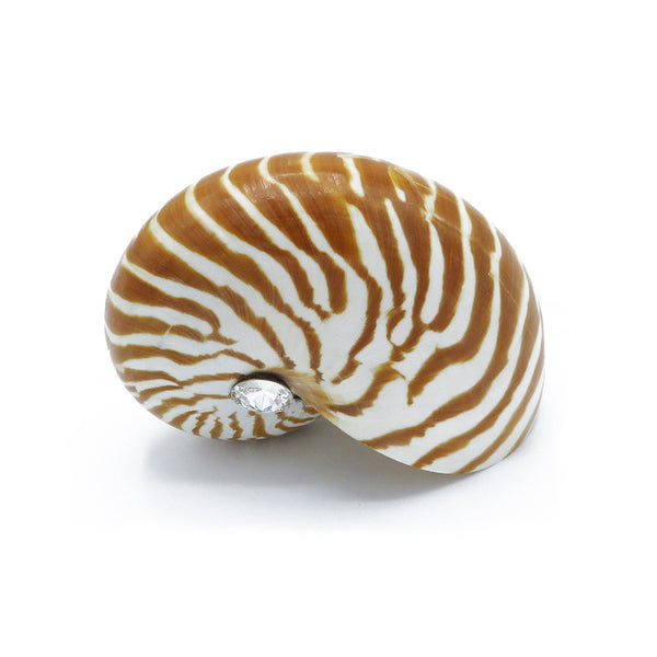 Real sea shells with applied crystals designs at FantaSea Coastal Home beach house decor