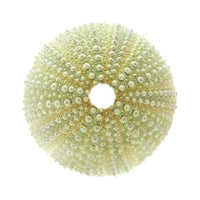 "Sea Urchin | Green (1""- 2"")"