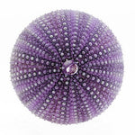 "Sea Urchin | Purple (1""- 2"")"